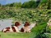 Dogs and waterlilies