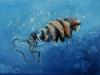 03 Horn shark egg
