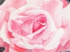 aquarelle-pink-rose